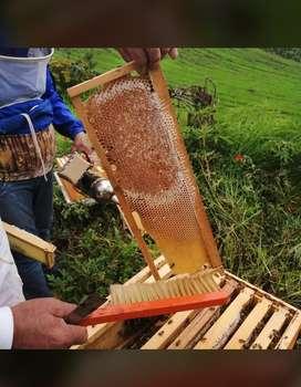 Baldes de miel multifloral 100% pura