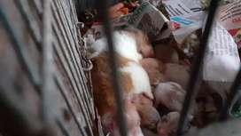 Vendo hamster(tengo muchos hamster que quiero vender)