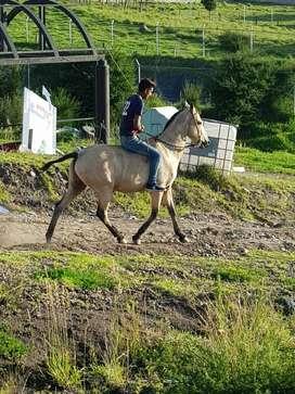 Vendo caballo de vaqueria