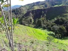 Vendo finca en Yolombó Antioquia