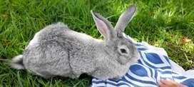 conejos para mascotas o en canal