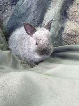 Conejo mini toy