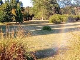 Alquiló 180 hectáreas para siembra de papa