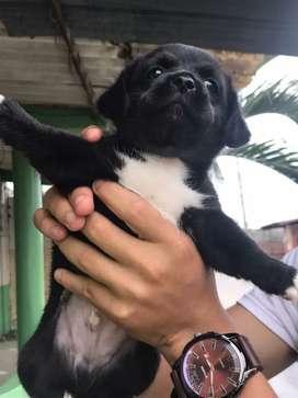 Vendo perrito