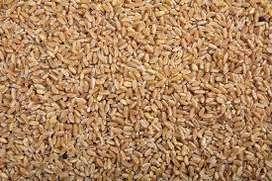 venta de trigo