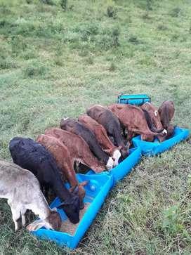 Se venden 10 animales tedestos