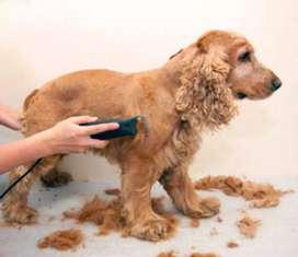 Se requiere peluquero canino