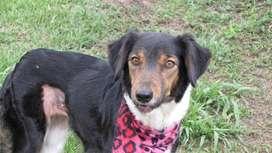 en adopcion perro: atenea (criolla)