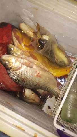 Vendo  pescados