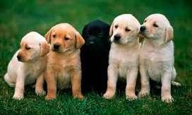 Guarderia Canina en Tres de Febrero