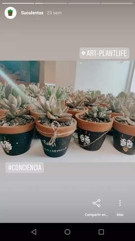 Recordatorios vivos Suculentas Cactus
