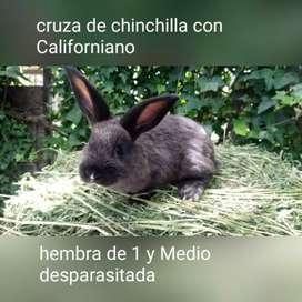 Conejos sombreados