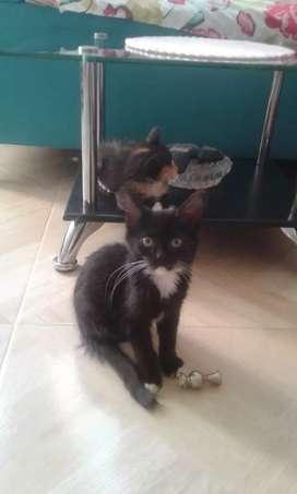 Hermoso gatico busca hogar