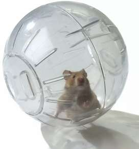 Bola Esfera De Ejercicio + Living World para Hamster