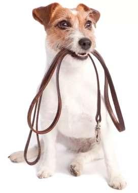 Se necesita personal para recreación canina