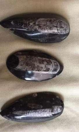 Piedras fosil pulidas