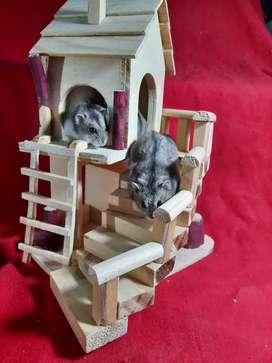 Casas para hamster de pino