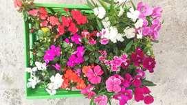 Vendo Helechos, Durantas, rocío y flores