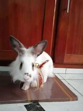 Conejos Miniloop