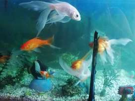 Pecera, Acuario y peces.