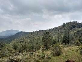 Finca 600 hectáreas apta para aguacate