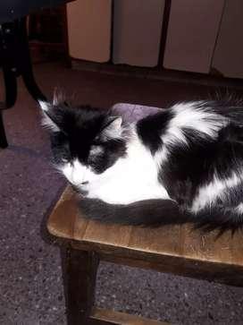 Regalo gatito