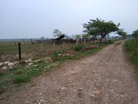 Vende Finca Ganadera de 41 ha. Municipio Nunchía Vereda Tacare