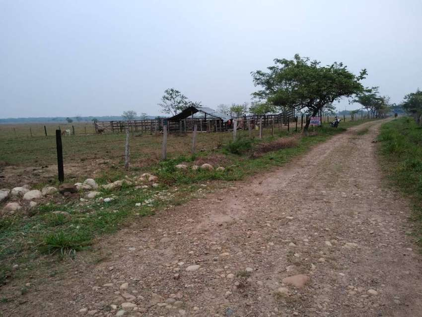 Vende Finca Ganadera de 41 ha. Municipio Nunchía Vereda Tacare 0