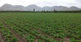 Terreno de cultivo en huacho (la caldera)