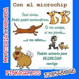 Microchip para Caninos