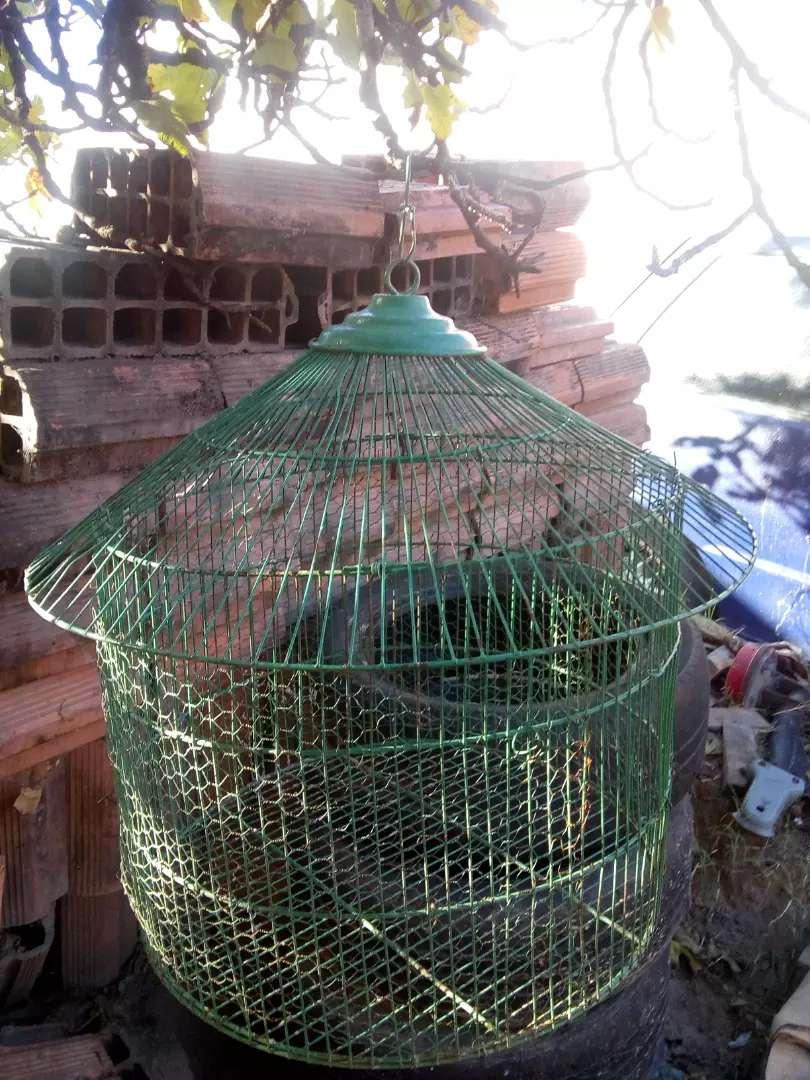 Vendo jaubla para pájaros