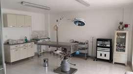 Veterinario,veterinaria,  perro,gato,mascota, ecografía,endoscopia, médico,cirugía, laboratorio clínico