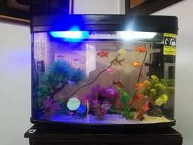 Se vende acuario completo con todos los accesorios y peces