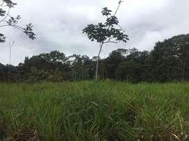 Finca ganadera de aproximadamente 86 hectáreas en el Oriente ubicada a 140km de Cuenca