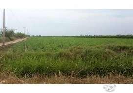 Venta de Terreno agrícola en El Carmen