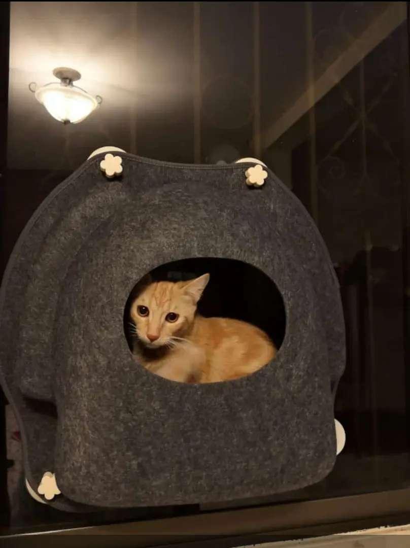 Cama Hamaca Colgante De Ventana Para Gatos Mascota