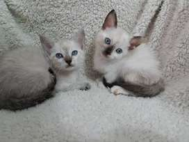 Lindos gaticos de dos meses