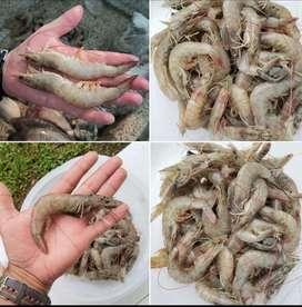 Camarones pelados y desvenados IQF