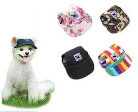 Gorras para perros