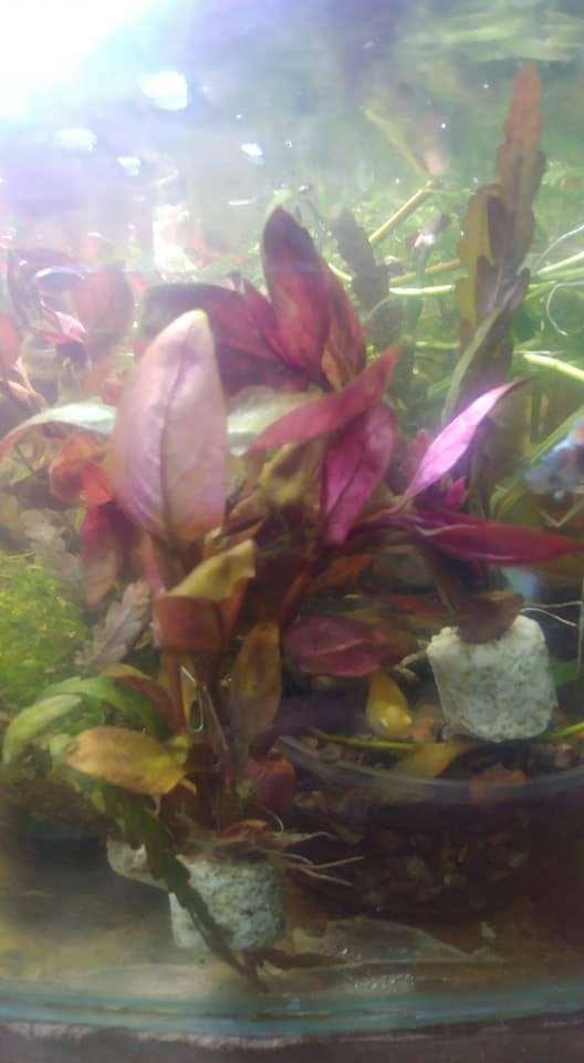 Peces plantas rojas para acios 4 plantas = 16 soles 0