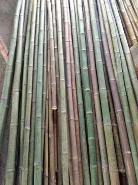Venta de caña brava y bambu