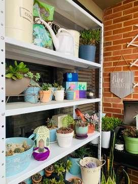 Vendo todas mis suculentas y cactus, materas, insumos mesas y tood de jardineria, abono