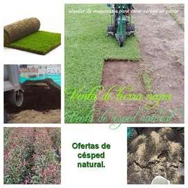 Venta de césped, grama, pasto, prado servicio de maquinaria para sacar césped uo panta natural y tierra negra abonada