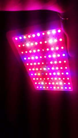 LED GROWING INDOOR 1000W