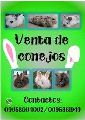 Venta de conejos