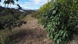 Vendo terreno en Urcuquí, sector Azaya