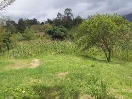 Se Vende Finca en Guateque Boyacá.