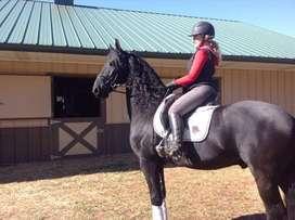 Increíble caballo para tener en familia