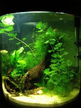asesoria en acuarios plantados