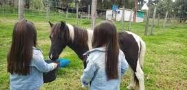 Se vende excelente caballo pony